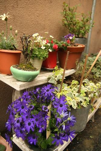雨のかまめ花壇