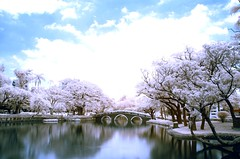 in Taiwan Taichung .  . Taichung park  IR DSC_8277 (Ming - chun ( very busy )) Tags: park wallpaper sky lake tree water landscape ir nikon d70 d70s taiwan infrared taichung   infravermelho    r72 infrarot   infrarrojos     infrapuna infrarood infrarouge  infrarossi   inframerah   infravrs infraerven