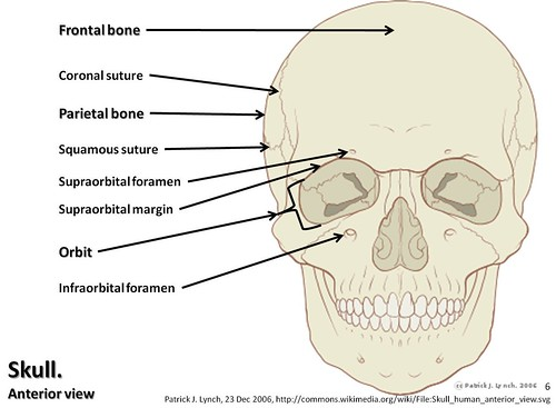 skull diagram, anterior view with labels part 1 axial skeletonskull diagram, anterior view with labels part 1 axial skeleton visual atlas, page 6