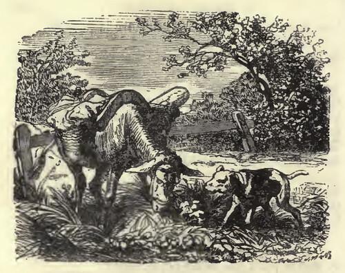 Canis et Asinus