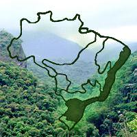 Bioma mata atlântica by Vitória5