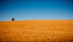 one tree hill (miemo) Tags: autumn summer sky tree fall nature field finland landscape countryside europe wheat hill grain crop savo nilsi gettyimagesfinlandq1