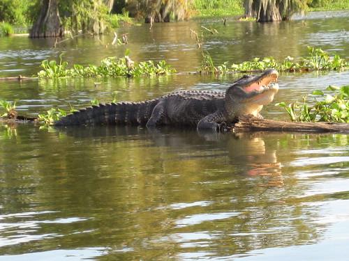 swamp tour 046