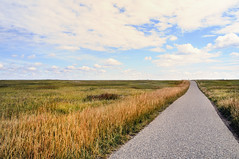The road goes on forever and the party never ends.. (calguru) Tags: road city autumn sky canada calgary fall weather clouds point see weeds sunday run canadian here explore your alberta bow now vanishing 5050 pathway wheatgrass nosehillpark ilikegrass