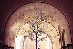 This Tree Grows In Brooklyn (Ben DeFlorio) Tags: nyc newyorkcity morning tree brick stone brooklyn arch under dumbo tint manhattanbridge archway underneath the canon40d