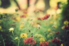 summer's spotlight (*Karo*) Tags: dallas arboretum explore 50mmf14d explorefrontpage florabellaactions