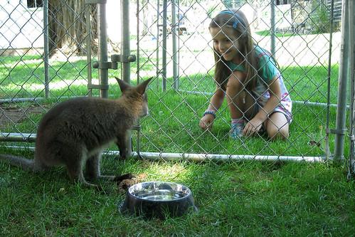 Zoar, Ohio Harvest Festival 2010:  Baby kangaroo.