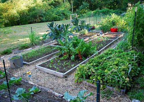 Fall Garden 2010