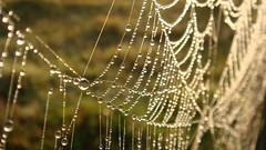 Wet webs (Paulo_T) Tags: spiderweb fotos flickrchallengegroup