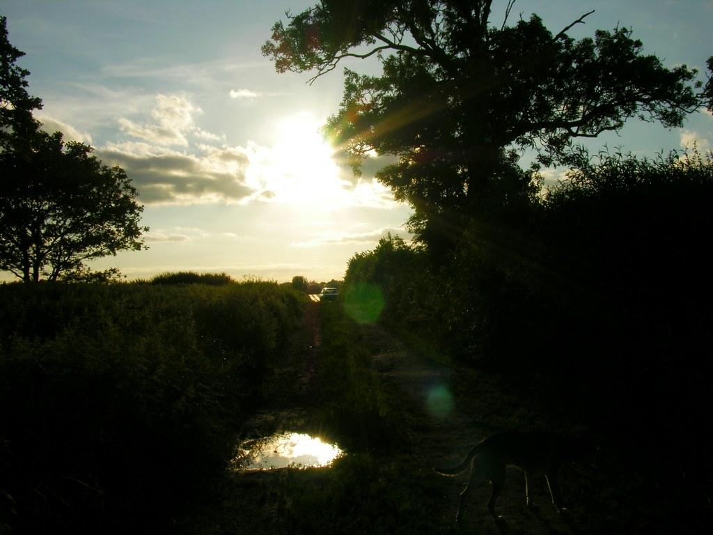 Sundown on the Motor-Car