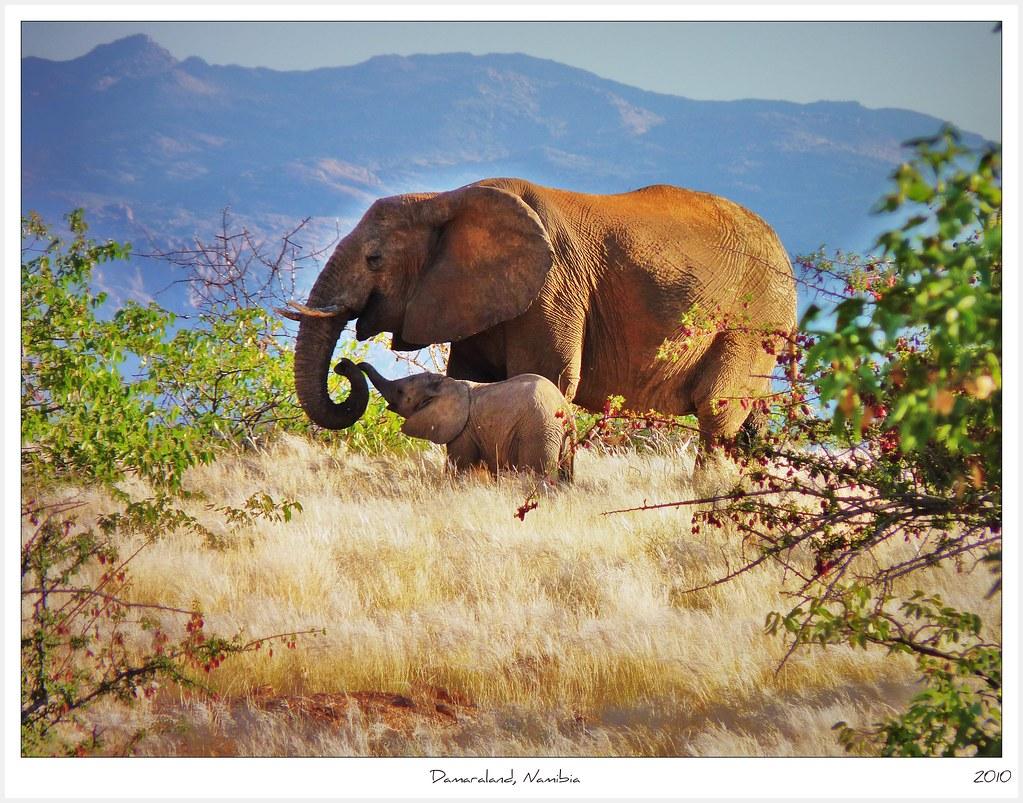 Foto Namibia - Avventura in Namibia- agosto 2018
