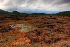 Siikaneva (33/40) (Heikki S) Tags: nature landscape swamp canonef1740mmf4lusm hdr maisema luonto suo siikaneva siikaneva1192010 siikanevansoidensuojelualue