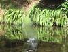 Splash (Eyersh) Tags: water reflections canong10
