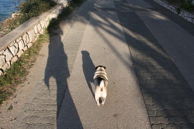 7:00. Morgentlicher Spaziergang mit dem Mops. Alleine. Herrlich