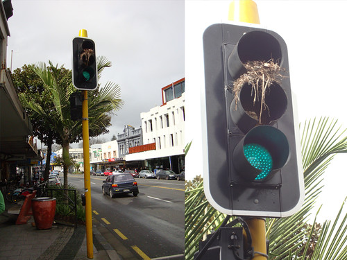 Ampel Karangahape Road