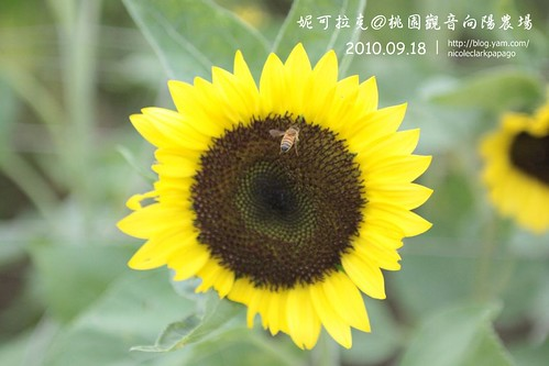 桃園觀音向陽農場20100918-007