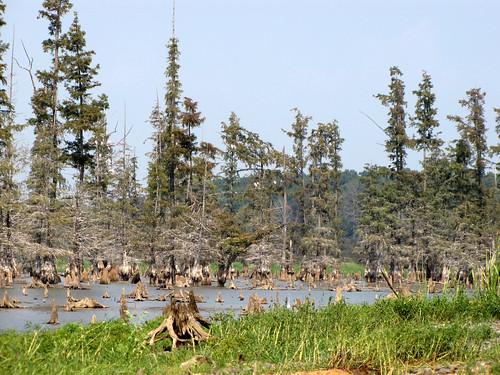 Millwood Lake-5