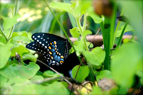 Butterfly Released