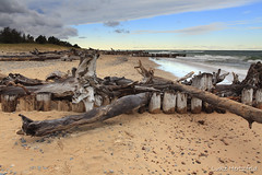 Whitefish Point Driftwood (Luke Hertzfeld) Tags: trees cold beach clouds sand michigan jetty driftwood lakesuperior whitefishpoint clearingsky greatlakeshipwreckmuseum