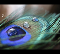 {  }     (3    d ) Tags: blue macro green nature closeup canon drops tears         3houd ohoud