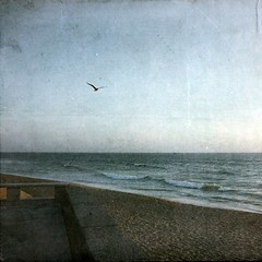 birds flying high (petitillusion) Tags: sea summer sky bird texture beach portugal sand holidays seagull atlanticocean lourinh canon1000d texturenkls