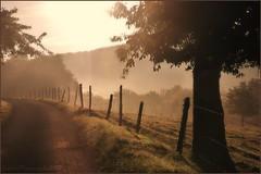 ~~Douceur d'un petit matin~~ (Jolisa) Tags: trees light nature sunrise lumire arbres sentier chemin brume matin leverdesoleil bruma nion croquenature micarttttworldphotographyawards micartttt flickrawardgallery michaelchee