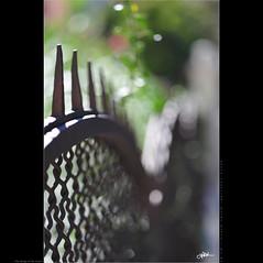 the stings of the heart (guido ranieri da re: work wins, always off) Tags: fence nikon bokeh indianajones d700 fencefriday nonsonoglianniamoresonoichilometri guidoranieridare