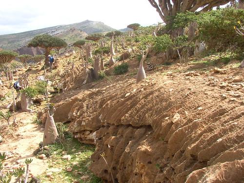Rillenkarren - Wadi Deneghen (Soqotra, Yemen) - 01