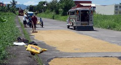 Rice on road ahead (JohntheFinn) Tags: asia traffic rice philippines roads custom hazard aasia riisi filippiinit