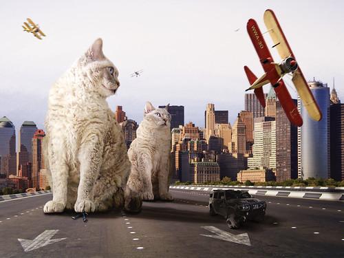 フリー写真素材, グラフィックス, フォトアート, 猫・ネコ,