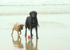 "Oz Says ""I'm Going To Steal This Ball Whilst Ky Is Bust Posing For The camera""! (Lady Of The Hounds) Tags:"