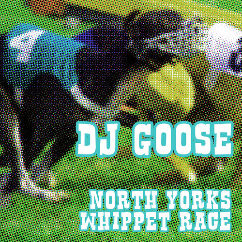 north yorks whippet race