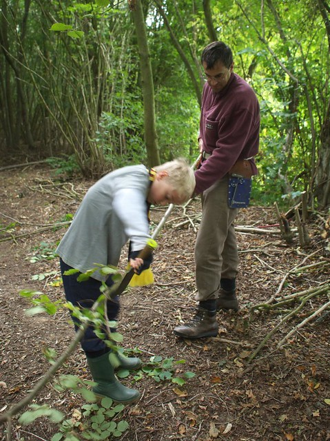 Coppicing in the woods
