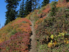 Fall colors on upper Shriner Peak trail.