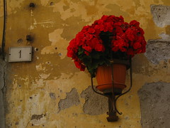 No.1 (sharon quarterman I) Tags: flowers red rustic entrance frascati numberone romanhills albanhills