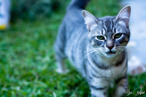 Invasor by Alex Caballero.