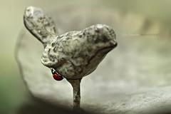coccinellidae | The petrified Lady bird (cliccath) Tags: macro statue ladybird ladybug coccinelle petrified macrophotography coleoptera coccinellidae coccinellaseptempunctata macrophotographie canoneos5dmarkii canonef100mmf28macrousmlens méduse cliccath ~explore~ cathschneider coléoptère médusa médusée pétrifiée