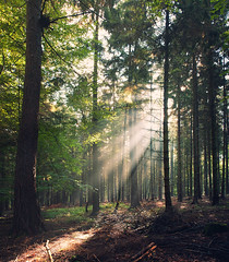 Rays (Philipp Klinger Photography) Tags: morning trees light sun mountains tree nature fog forest germany landscape deutschland haze woods europe ray branch hessen frankfurt branches natur bad rays wald philipp bume taunus baum hesse oberursel ree badhomburg klinger homburg vertorama vanagram forellengut