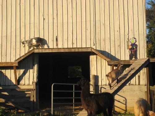 Larriland Farm 2010