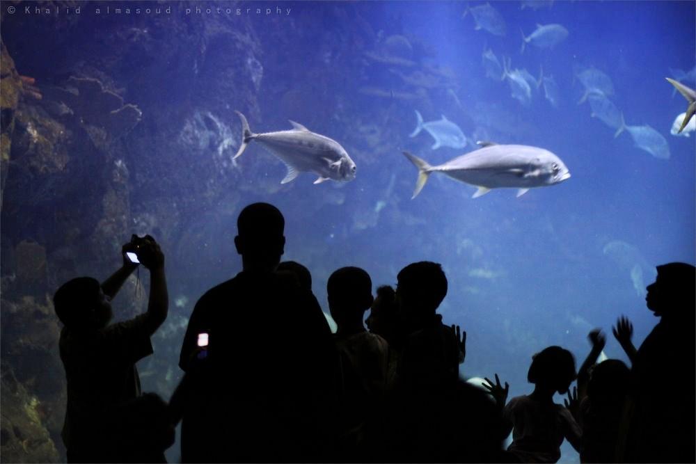 Aquarium viewers!