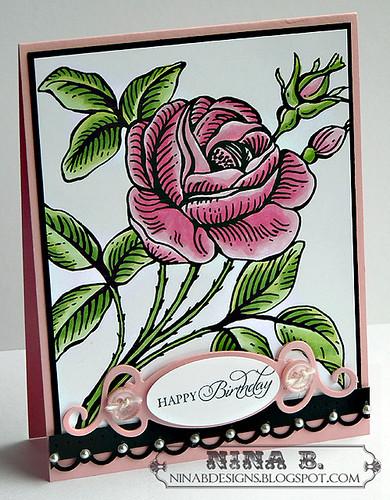 NR Rose 2