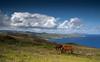 20091227 Isla de Pascua 377 (blogmulo) Tags: travel sea sky horses clouds canon easter landscape island caballos mar ar pascua paisaje viajes cielo nubes isla 2009 nui rapa canon450d blogmulo 200912lunademiellunamielamericasudamericachileviajestravelarisladepascuaeasterislandmoaiahurapanui