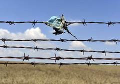 Bulgaria-Turkey Border Crossing (UNHCR Central Europe) Tags: fence ngc border bulgaria migration unhcr bordercrossing wirefence bordercontrol centraleurope borderpolice haskovo   haskovoprovince kapitanandreevo   irregularm