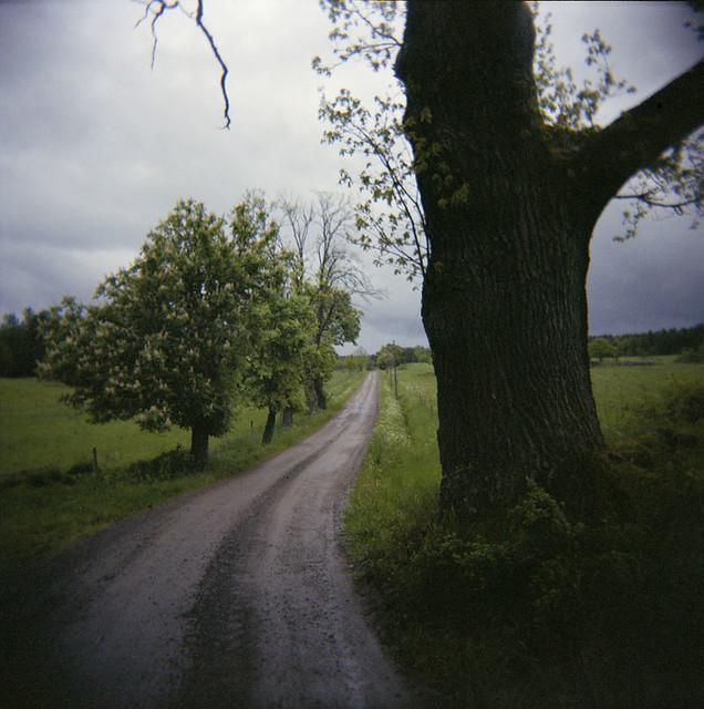 Trädväg