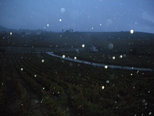 Raining during the harvest in the Douro valley