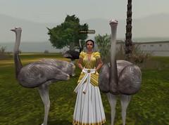 Meritaten finds ostriches in virtual Amarna's (Aketaten's) gardens (mharrsch) Tags: bird ancient egypt ostrich 18thdynasty nefertiti akhenaten virtualworld meritaten amarna virtualenvironment mharrsch akhetaten heritagekey