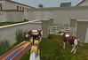 Meritaten in virtual Amarna's (Aketaten's) cattle pens (mharrsch) Tags: cow ancient cattle egypt 18thdynasty nefertiti akhenaten virtualworld meritaten amarna virtualenvironment mharrsch akhetaten heritagekey