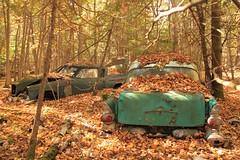 Long forgotten (SamSpade...) Tags: wood autumn orange green fall leaves canon colours 1957 pontiac 50s studebaker relics 1959 lark pathfinder lanark 347 offthebeatentrack 8230 1957pontiacpathfinder 1959studebakerlark permanentlyparked hiddenawayinawood 4seasonsmagicalreign