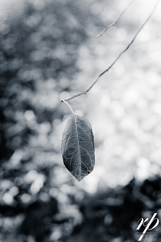 ~ 284/365 Lonely Leaf ~