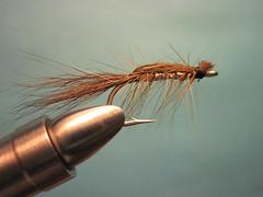 Horner's Shrimp